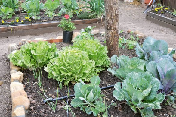 Urban style gardens